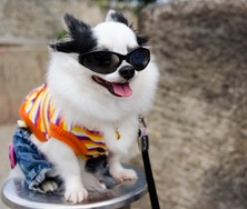 Florida Travel Tips: Caring for Your Canine While You're Away